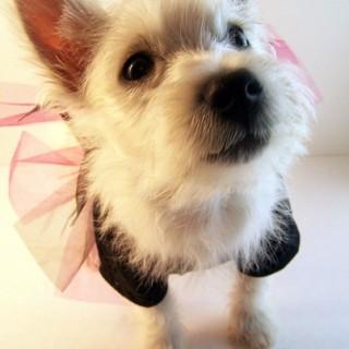 Little Princess Malia!
