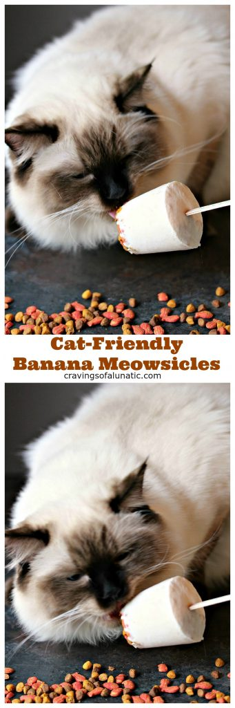 Cat-Friendly Banana Meowsicles from cravingsofalunatic.com- These refreshing popsicles are perfect for summer, and will let your cat cool off in style. Whip up a batch of these super easy 3 ingredient Cat-Friendly Banana Meowsicles today! @CravingsLunatic