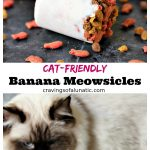 collage image of Cat-Friendly Banana Meowsicles