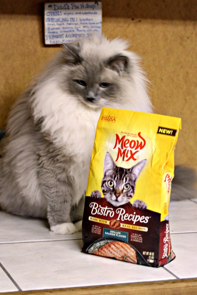 Spark with his Meow Mix