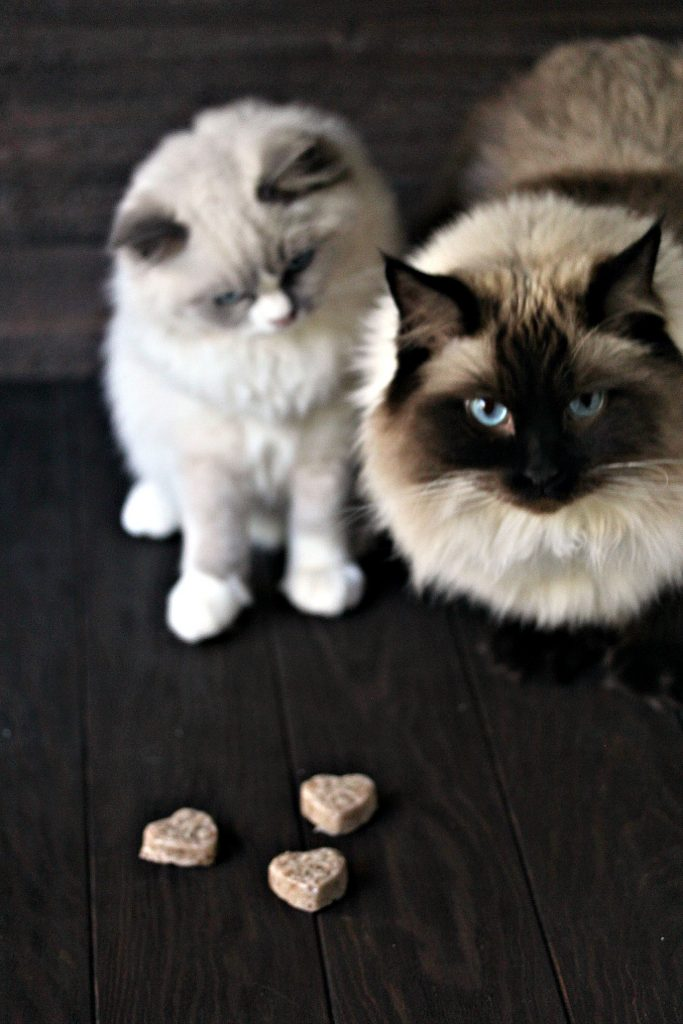 Cat-Friendly Frozen Banana Bites from cravingsofalunatic.com- These 2-Ingredient Cat-Friendly Frozen Banana Bites are the perfect way to treat your cat all year long. They are super easy to make and cats will gobble them right up.